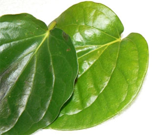 Betel Leaf (Piper Betel) promotes good health!!