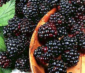 how healthy is dried fruit jamun fruit in usa