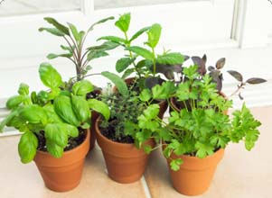 home-grown-herbs